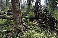 Urlaubsregion Nationalpark Bayerischer Wald
